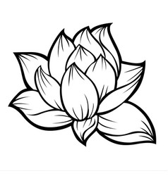 Lotus Flower Drawing Vector Images Over 3 500