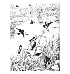 Swallow roost vintage vector