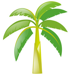 Banana tree on white background vector