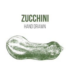 hand drawn zucchini vector image