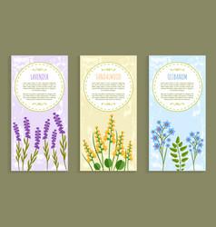 Lavender and olibanum set vector