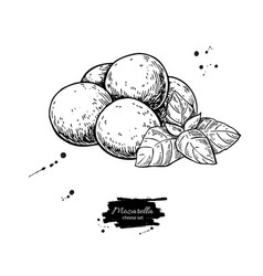 Mozzarella cheese drawing hand drawn baby vector