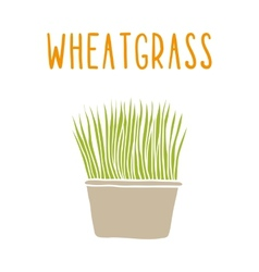 Wheatgrass vector image