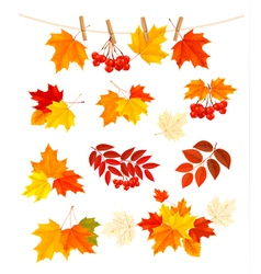 Autumn background with colorful leaves design vector
