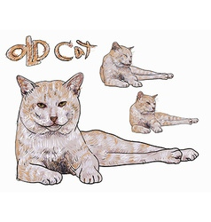 Old yellow cat vector image vector image