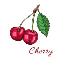 Cherry berries icon vector