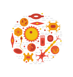 Human cell type set vector