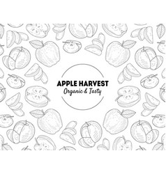 apple harvest banner template organic and tasty vector image