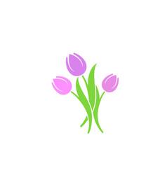 bunch tulips vector image