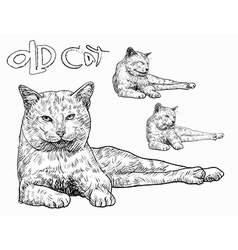 Old cat vector image
