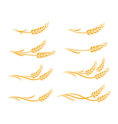 Wheat ears and oats spikes icons set vector