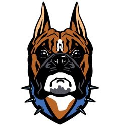 boxer head front view vector image
