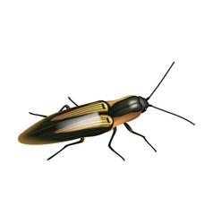 Click beetle vector
