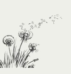 Dandelion flying seeds hand drawn vector