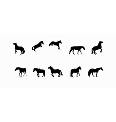Horse Runs Hops Gallops Isolated on White vector image