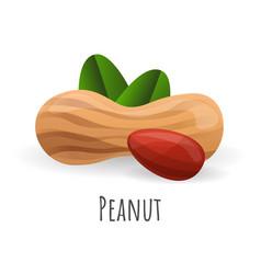 peanut icon cartoon style vector image
