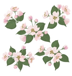 Apple tree flowers and green leaves set vector
