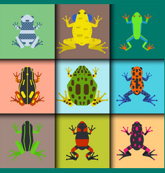 Frog cartoon tropical animal cards cartoon vector