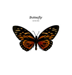 orange monarch butterfly hand draw sketch vector image