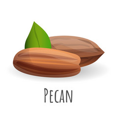 pecan icon cartoon style vector image