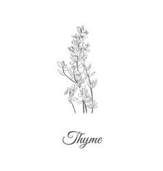 Thyme thyme vector