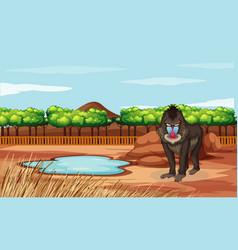 Baboon standing in zoo vector