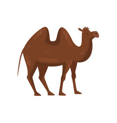 Brown camel with two humps on the back side view vector