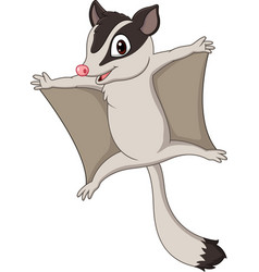 Cartoon sugar glider gliding vector