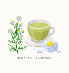 Chamomile herbal tea isolated on white background vector