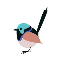 Variegated fairy wren bird vector