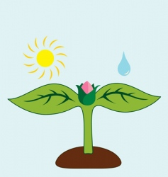 What plant needs vector