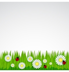 Spring background with grass chamomile vector image