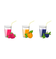 Raspberries apricot and blackberry juices vector