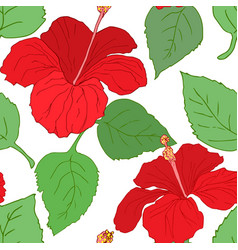 seamless pattern with hibiscus vector image