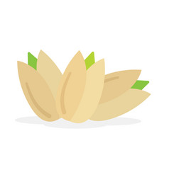 set of pistachios nuts vector image