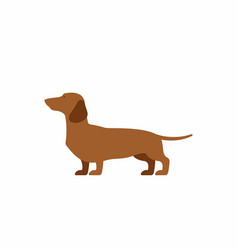 dog dachshund vector image