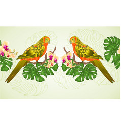 floral border seamless background sun conure vector image