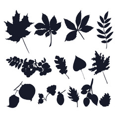 leaves silhouettes isolated on white background vector image