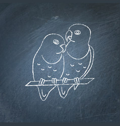 Lovebird parrots icon sketch on chalkboard vector