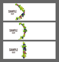 Set of banners with bunches of grapes vector