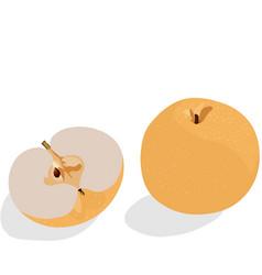 Stock of a snow pear or korean vector