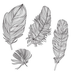feather sign isolated set different birds doodle vector image vector image