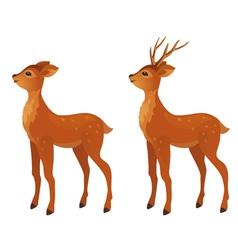 Young deer vector image