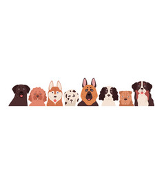 Portrait group funny dogs different breeds vector