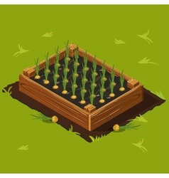 Vegetable Garden Box with Onions Set 11 vector