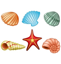 Sea shells and sea star vector image