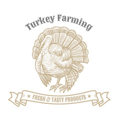 isolated vintage gold emblem for farm with turkey vector image