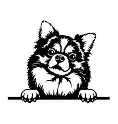 Long-haired chihuahua peeking dog - head isolated vector