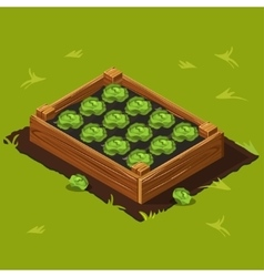 Vegetable Garden Box with Cabbage Set 9 vector