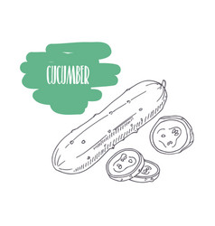 hand drawn cucumber isolated on white vector image vector image